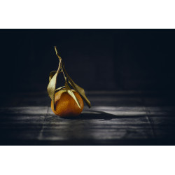 Photo Still Life Citrus :: Art Gardane